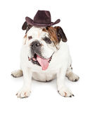 Funny Dog Dressed as a Cowboy Royalty Free Stock Photos
