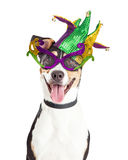 Funny Dog Dressed For Mardi Gras. Funny photo of a happy and smiling dog wearing Mardi Gras glasses and jester hat
