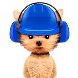 Funny dog in earphone isolated on white. Funny dog in earphone and hard hat isolated on white background. Fixing computer and repair center concept with cute dog Stock Photo