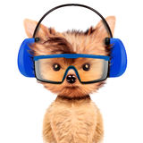Funny dog in earphone isolated on white. Funny dog in earphone and protective glasses isolated on white. Fixing computer and repair center concept with cute dog Royalty Free Stock Photography