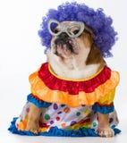 Funny dog Stock Photo