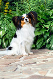 Funny dog in the garden Royalty Free Stock Image