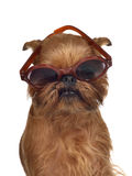 Funny dog with glasses. Isolated Royalty Free Stock Photos