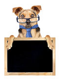 Funny dog glasses tie behind blank blackboard isolated Royalty Free Stock Photography