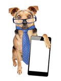 Funny Dog glasses tie smartphone blank screen isolated. Funny Dog wearing glasses and tie like businessman with paw on mobile with blank screen isolated Stock Image