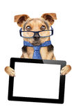 Funny Dog glasses tie tablet blank screen isolated Stock Photos