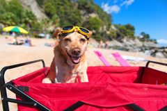 Funny dog with goggles at beach. Funny dog with goggles at the beach royalty free stock image