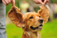funny dog on the green grass Stock Photography