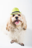 Funny dog with green hat Royalty Free Stock Photos