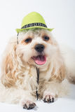 Funny dog with green hat Stock Photography