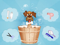Funny dog grooming Stock Photography