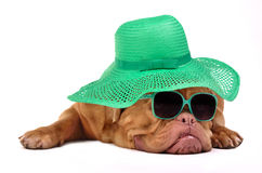 Funny dog with hat and glasses Royalty Free Stock Photography