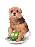 Funny dog hiding in a cup Stock Images