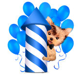 Funny dog holding firework rocket and balloon Stock Photo