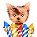 Funny dog holding firework rockets Stock Image