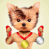 Funny dog holding gold, silver and bronze medal Royalty Free Stock Photos