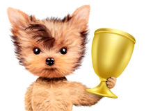 Funny dog holding golden cup Stock Photo