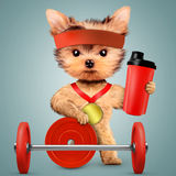 Funny dog holding shaker and sport equipment Royalty Free Stock Images