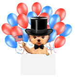 Funny dog holding USA flag. Concept of 4th of July. Funny dog holding USA flags, poster and surrounded by balloons. Concept of 4th of July and Independence Day Royalty Free Stock Image