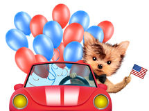 Funny dog holding USA flag. Concept of 4th of July. Funny dog holding USA flags, sitting on car and surrounded by balloons. Concept of 4th of July and Vector Illustration