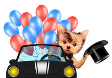 Funny dog holding USA flag. Concept of 4th of July. Funny dog holding USA flags, sitting on car and surrounded by balloons. Concept of 4th of July and Stock Photo
