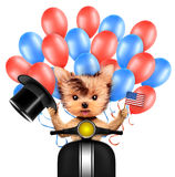 Funny dog holding USA flag. Concept of 4th of July. Funny dog holding USA flags, sitting on scooter and surrounded by balloons. Concept of 4th of July and Stock Images