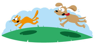 Funny Dog Hunting a Cat Stock Photo