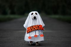 Free Funny Dog In A Ghost Costume With A Happy Halloween Sign Royalty Free Stock Image - 125423766