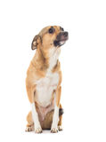 Funny dog Royalty Free Stock Photography