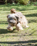 Funny Dog Jump Stock Photo
