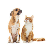 Funny dog and kitten Royalty Free Stock Images