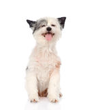 Funny dog looking at camera. isolated on white background Stock Images