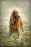 Funny dog looking Stock Image
