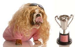 Funny dog with lover trophy Royalty Free Stock Photo
