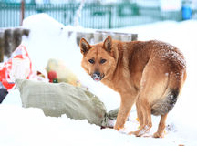 Funny dog near some rubish. Funny dog near some trash royalty free stock photography