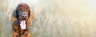 Funny dog nose Royalty Free Stock Photos