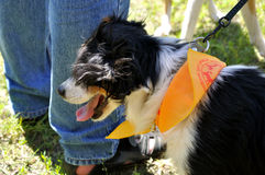 Funny dog Stock Photos