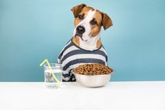 Funny dog in pajamas having breakfast at table. Illustrative con. Cept of puppy with bowl of pet food at minimalistic white and blue background royalty free stock image