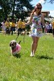 Funny dog Royalty Free Stock Photo