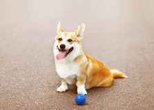Funny dog playing Royalty Free Stock Photography