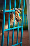 Dog playing in the playground Stock Images