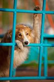 Dog playing in the playground Stock Photo