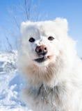 Funny dog portrait Stock Photos