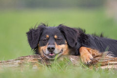 Funny Dog Portrait Royalty Free Stock Photo