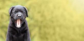 Funny dog puppy Royalty Free Stock Photos