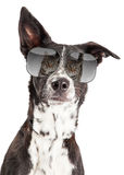 Funny Dog With Reflection of Cat in Sunglasses Stock Photos