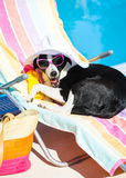 Funny dog resting on summer vacation at swimming pool Stock Photo