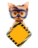 Funny dog with road sing isolated on white. Funny dog in safety glasses with road sing isolated on white. Concepts for web banners, web sites. Fixing computer Royalty Free Stock Photo
