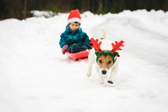 Funny dog with Rudolph reindeer`s antlers pulls sled with Santa Claus. Humorous Christmas concept with dog and child royalty free stock photo