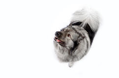 Funny Dog Royalty Free Stock Photo